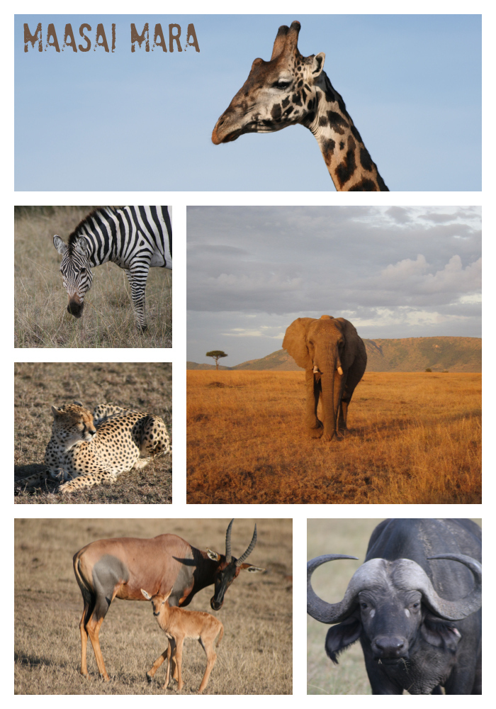 Safari-Collage